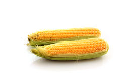 Two  corns Stock Photo