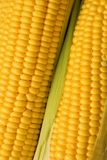 Two corns background Stock Photos