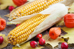 Two corns, hawthorn and dog rose berries. Autumn still life. Stock Photo