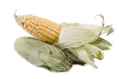 Two corns right on top Stock Image