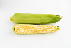 Two corns on a white background Royalty Free Stock Images