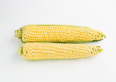 Two corns on a white background Royalty Free Stock Photography