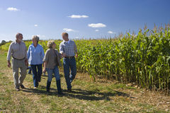 Two couples walking by cornfield stock photo