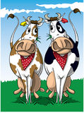 Two Cows vector illustration