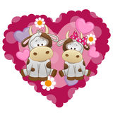 Two Cows Royalty Free Stock Images