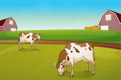 Two cows in the farm royalty free illustration