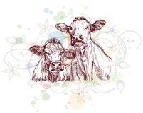 Two cows hand draw sketch & floral ornament Stock Photo