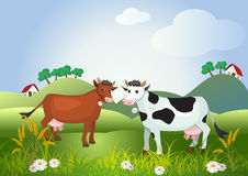 Two cows on meadow fields Stock Photography