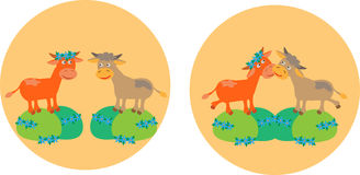 Two cows on meadow fields Stock Photo