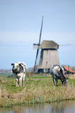 Two cows and a windmill Royalty Free Stock Image