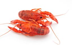 Two crab Royalty Free Stock Photo