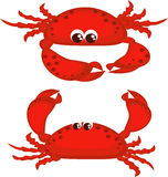 Two crabs. Two red crabs isolated , marine food vector illustration