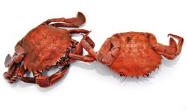 Two crabs Stock Photos