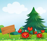 The two crabs near the empty signboard Royalty Free Stock Image