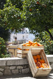 Two crates boxes with oranges and orange trees on the road Royalty Free Stock Images