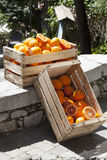 Two crates boxes with oranges and orange trees on the road Royalty Free Stock Photo