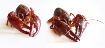 Two crayfish Stock Photo