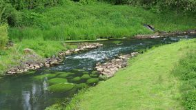 Two creeks flow in each other. Real time stock footage