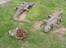 Two crocodile made from hay Royalty Free Stock Photos