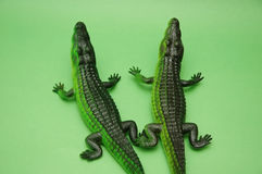 Two crocodiles. On green background stock photo