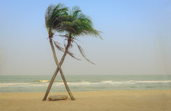 Two cross coconut palm tree on the beach. Stock Images