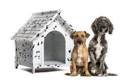 Two Crossbreed dogs in front of a spotted kennel. Two Crossbreed dogs sitting in front of a spotted kennel Stock Photography
