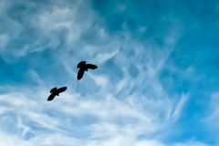 Two crow silhouette in the cloudy sky Royalty Free Stock Image