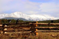 Two crows on fence with front range in the background. Two crows on a log fence with berthoud pass in the background at beginning of winter Royalty Free Stock Photos