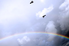 Two crows flying in the storm Stock Photography