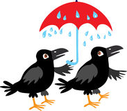 Two crows and an umbrella. A vector cartoon illustration of two black crows sheltering from the rain under a red umbrella Royalty Free Stock Images