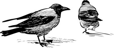 Two crows Stock Images