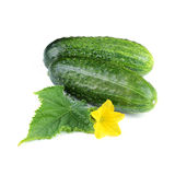 Two Cucumber Vegetables with Leaf and Flower Royalty Free Stock Images