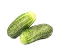 Two cucumbers. Royalty Free Stock Image