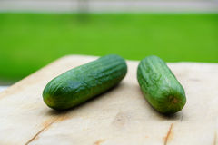 Two cucumbers Stock Images
