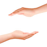 Two cupped protection hands. Isolated on white Stock Images