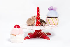 Two curious domestic mice are sitting on a plate with plush cakes. Stock Images