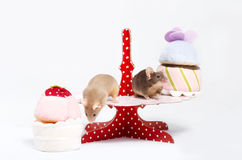 Two curious domestic mice are sitting on a plate with plush cakes. Royalty Free Stock Image
