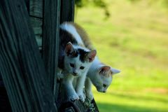 Curious kittens playing on bench stock image