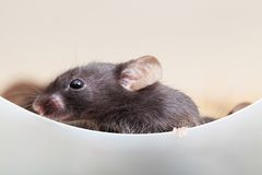 Two Curious Mouses Royalty Free Stock Images