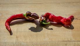 Two curling cayenne peppers on a wooden block next to each other with a short shadow. Curling cayenne peppers on a wooden block next to each other with a short stock photography