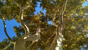 Two curvy colorful plane trees under sun lights stock image
