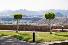 Two cut trees. On background of mountains in Egypt royalty free stock photo