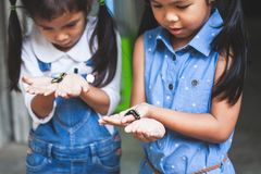 Two cute asian child girls holding black caterpillar. Two cute asian child girls holding and playing with black caterpillar with curious and fun together royalty free stock images