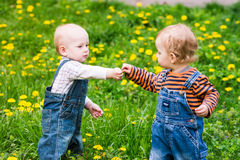 Two cute baby boys on a lawn with dandelions Stock Images