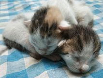 Two Cute Baby Kittens Relaxing Picture stock photography