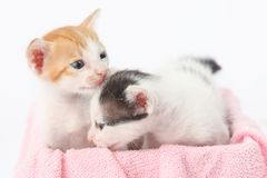 Two cute baby kittens Royalty Free Stock Photos