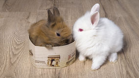 Two cute baby rabbits with hearts. Stock Photo