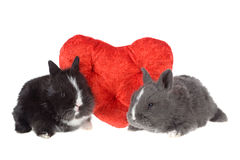Two cute baby rabbits with red hearts Stock Photo