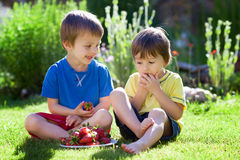 Two cute boys eating strawberries Royalty Free Stock Images