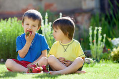 Two cute boys eating strawberries Stock Photography